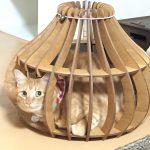 室内飼育ペット向け木製ケージ・サークルの開発